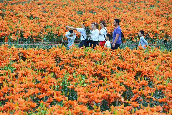 Tourists visit lily garden in SW China's Guizhou