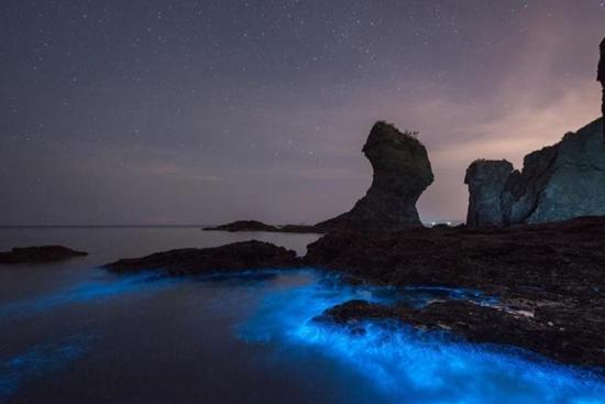 Sea turns fluorescent in Dalian