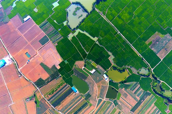 Aerial photo taken on May 27, 2017 shows the scenery in Shanglin County of south China's Guangxi Zhuang Autonomous Region. Rural tourism helped to boost local economy with its karst landform. (Xinhua/Huang Xiaobang)