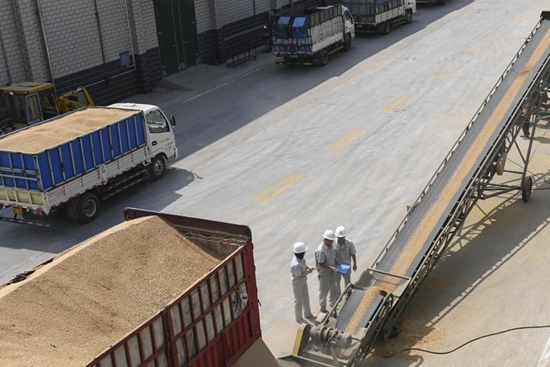 Wheat harvest work ends in China's Hebei