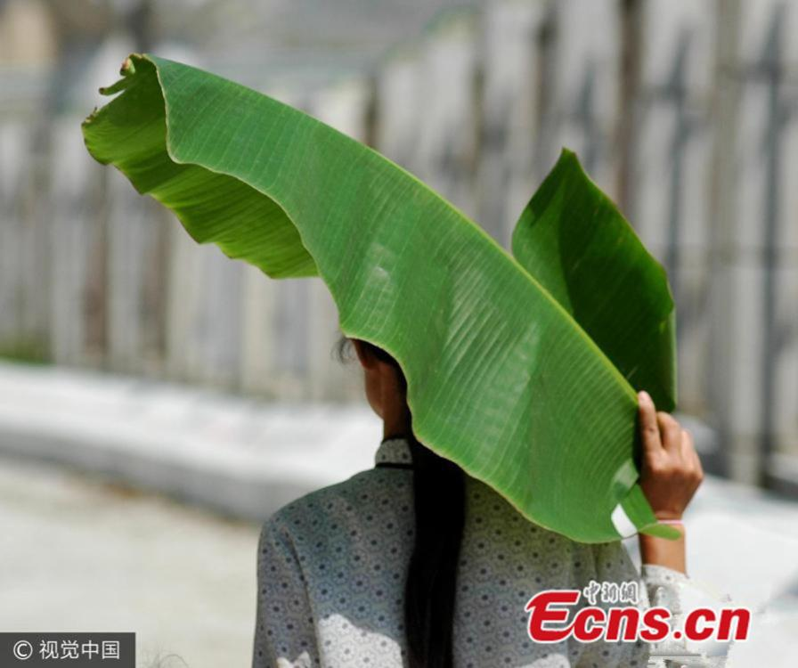Banana leaves provide shade from the scorching sun in Guangxi Zhuang autonomous region, July 28, 2005. (Photo/VCG)