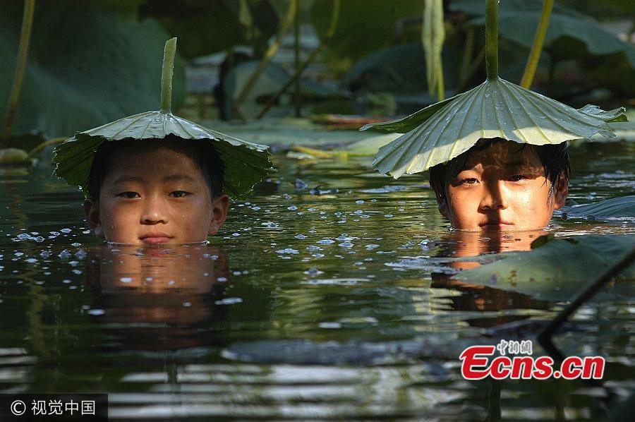As the temperature hits 39 degrees, two cheeky boys use lotus leaves to shield themselves from the sun in a pond in Wuhu, Anhui province, July 26, 2004. (Photo/VCG)