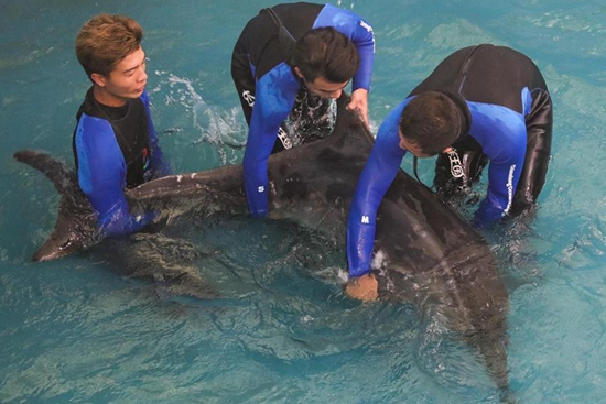 "Dolphin ""Jiang Jiang"" released back to ocean near S China"