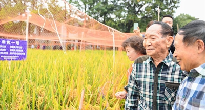 Third-generation hybrid rice achieves high yields in China