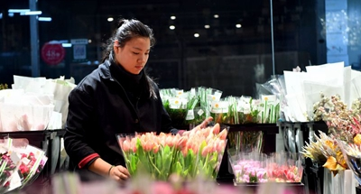 Air Silk Road ferries blooming Dutch tulips to China