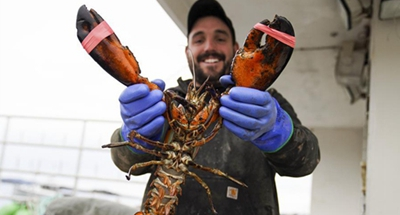 U.S. lobster industry anxious to resume business with China