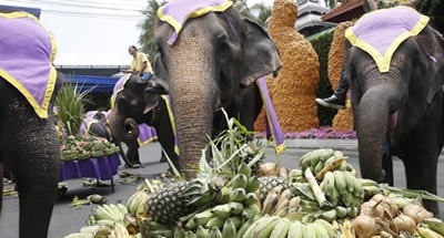 Thailand's tourist elephants face crisis amid COVID-19