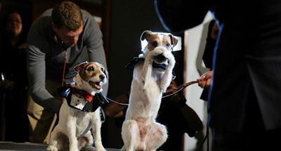 Uggie, the star of 'The Artist,' wins greatest movie mutt award