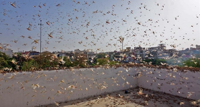 Indian capital braces for attack amid locust outbreak