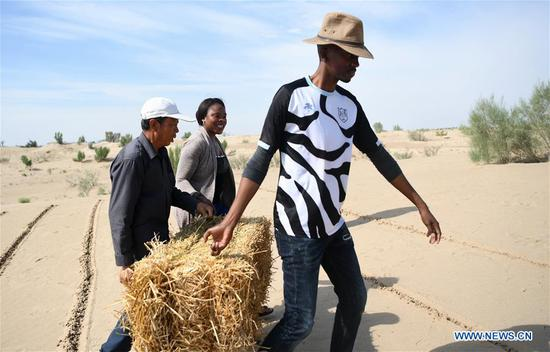 Nakanyala Elina Shekupe (C) learns desert control in Minqin County, northwest China's Gansu Province, Aug. 26, 2018. Shekupe, 37, is an agricultural technology official from Namibia. She and 11 other students are taking part in a desertification combating and ecological restoration training course organized by China's Ministry of Commerce in Gansu.