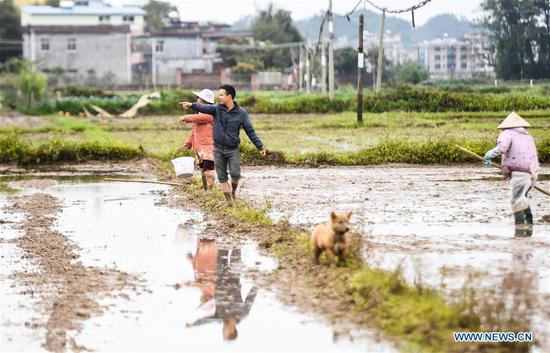 Huang Yongcheng (C), a local farmer, organizes members of an agricultural cooperative to do farm work in Banping village, Kangxiling Town of Qinzhou, south China's Guangxi Zhuang Autonomous Region, March 7, 2019. Farmers in Qinzhou have been busy with planting early rice in spring. (Xinhua/Zhang Ailin)