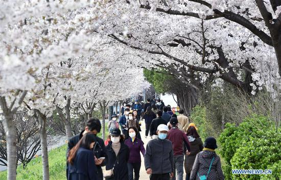 People wearing face masks walk under cherry trees in Daegu, South Korea, March 29, 2020. South Korea reported 105 more cases of the COVID-19 compared to 24 hours ago as of midnight Sunday local time, raising the total number of infections to 9,583. (NEWSIS/Handout via Xinhua)