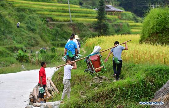 Villagers carry a thresher harvest paddy rice at Wuying, a village of Miao ethnic group under joint administration by Rongshui County in Guangxi Zhuang Autonomous Region and its neighbouring Congjiang County of Guizhou Province, Sept. 2, 2019. Farmers of Miao ethnic group here are busy harvesting paddy rice as the weather is fair recently. (Xinhua/Huang Xiaobang)