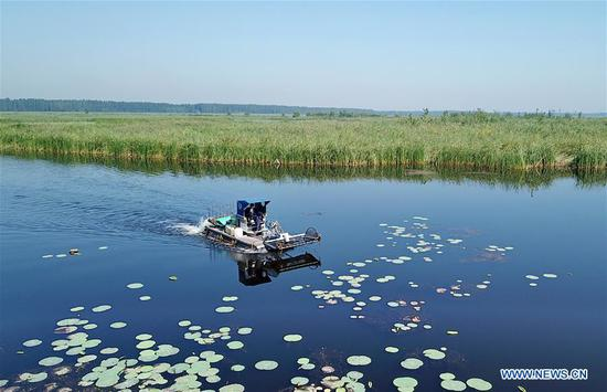 Aerial photo taken on Aug. 31, 2019 shows a flotage-cleaning boat in Baiyangdian lake of Xiongan New Area, north China's Hebei Province. According to the Administrative Committee of Xiongan New Area, Xiongan has entered a phase of large scale construction. (Xinhua/Mu Yu)