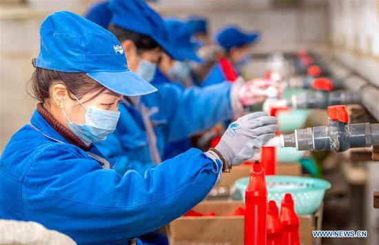 Workers work on a production line of disinfectant at a workshop in Yuncheng City, north China's Shanxi Province, Jan. 27, 2020. To help fight the outbreak of pneumonia caused by novel coronavirus, workers in factories in Shanxi work overtime to meet with the increasing need. (Photo by Bao Dongsheng/Xinhua)