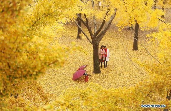 Tourists take selfies under a ginkgo tree at a garden in Tancheng County, Linyi City, east China's Shandong Province, Nov. 5, 2018. (Xinhua/Zhang Chunlei)