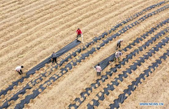In this aerial photo taken on April 20, 2019, farmers work on a chrysanthemum planting base in Jinniu Township of Lujiang County, Hefei, east China's Anhui Province. Guyu, literally meaning