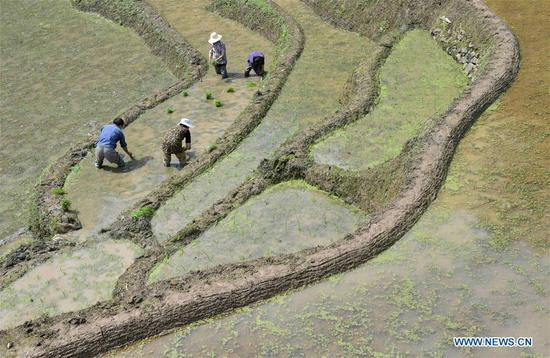Farmers work in the terraced fields in Dangyangping Village of Xuanen County, central China's Hubei Province, May 7, 2018. (Xinhua/Song Wen)