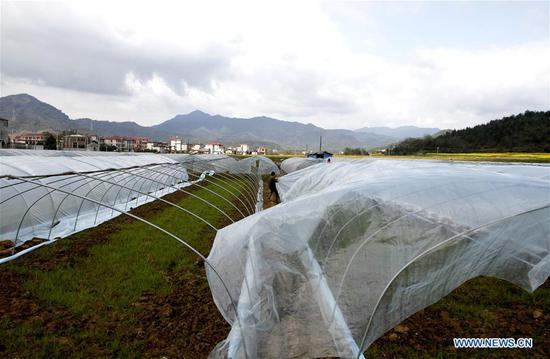 Photo taken on March 14, 2019 shows farmers setting up greenhouses at Shixia Village of Renshou Township in Jing'an County, east China's Jiangxi Province. (Xinhua/Xu Zhongting)