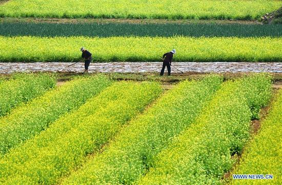 Farmers work at a field in Shangzhi Village of Yiyuan County, east China's Shandong Province, May 7, 2018. (Xinhua/Zhao Dongshan)