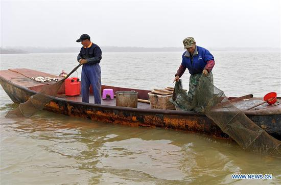 Workers catch Chinese mitten crabs from Junshan Lake in Jinxian County of Nanchang, east China's Jiangxi Province, Nov. 6, 2018. Local fishery workers are busy catching Chinese mitten crabs in Junshan Lake during their best fishing season. The total volume of crabs caught in the lake is estimated to reach 2,200 tonnes in 2018. The Chinese mitten crabs of Junshan Lake are a geographical indication (GI) product of China, and are sold to Japan, South Korea, Singapore and other international markets. (Xinhua/Peng Zhaozhi)