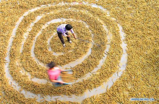 Farmers dry grain in Dongyuezhuang Village, Zibo City of east China's Shandong Province, Sept. 10, 2018. (Xinhua/Zhao Dongshan)