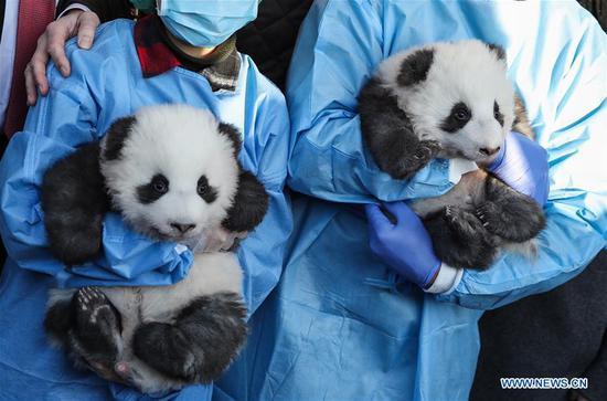 柏林的双胞胎熊猫宝宝有名字 2