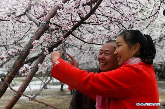 People take selfie with peach flowers in snow at a park in Hohhot, capital of north China's Inner Mongolia Autonomous Region, April 3, 2018. A cold front brought snowfall to the city in early spring time. (Xinhua/Liu Lei)