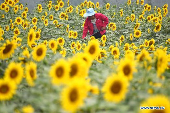 A woman works in the field at Heiya Village of Shiqiao Town in Yiyuan County, east China's Shandong Province, July 7, 2018. Saturday marks Xiaoshu, or Lesser Heat, the 11th of the 24 solar terms in the Chinese lunar calendar which means the beginning of hot summer. (Xinhua/Zhao Dongshan)