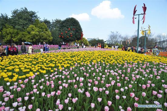 Tourists enjoy tulip flowers during Spring Festival holiday at Liuzhou Expo Garden in Liuzhou City, south China's Guangxi Zhuang Autonomous Region, Feb. 7, 2019. (Xinhua/Li Bin)