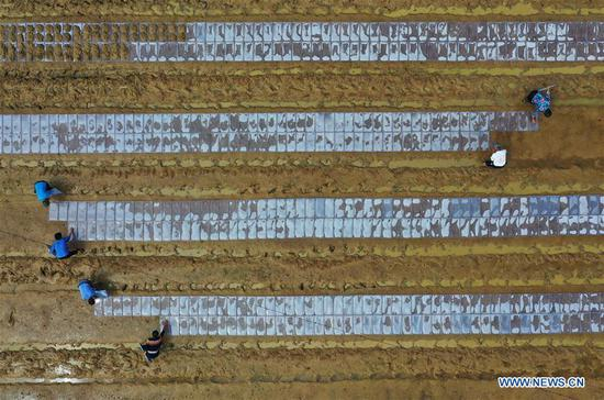 In this aerial photo taken on April 20, 2019, farmers work in a field in Chebei Village of Baogai Township, Hengnan County, Hengyang, central China's Hunan Province. Guyu, literally meaning