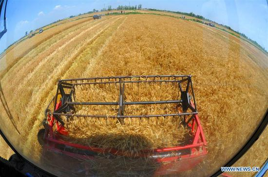 A reaper works at the wheat field in Wumaying Village of Nanpi County, north China's Hebei Province, June 10, 2019. The wheat has entered harvest season here. (Xinhua/Mu Yu)