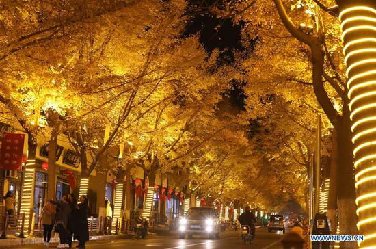 People walk in an alley of gingko trees in Tianshui City, northwest China's Gansu Province, Nov. 14, 2019. (Xinhua/Guo Gang)
