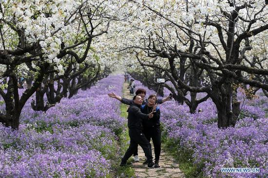 Tourists take selfie with pear flowers and orchid blossoms at Santaishan Forest Park in Suqian City, east China's Jiangsu Province, April 3, 2018. (Xinhua/Zhou Guoqiang)