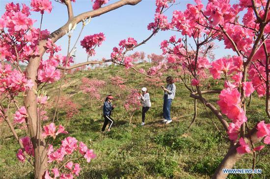 People enjoy the spring view in Dujuan Mountain of Zhongming Town in Tongling, east China's Anhui Province, April 10, 2018. (Xinhua/Guo Shining)