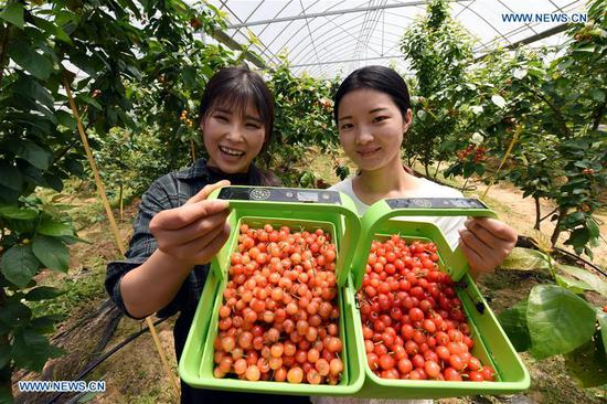 Visitors show fruit they picked at an self-service picking garden in Yujiang County, east China's Jiangxi Province, April 19, 2018. New technologies and industries have made life smarter in Yujiang County. (Xinhua/Song Zhenping)