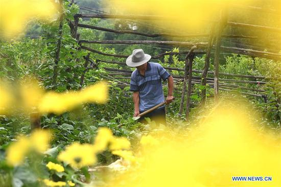A man works in the field at Caibanyu Village of Lishan Sub-district in Yiyuan County, east China's Shandong Province, July 7, 2018. Saturday marks Xiaoshu, or Lesser Heat, the 11th of the 24 solar terms in the Chinese lunar calendar which means the beginning of hot summer. (Xinhua/Zhao Dongshan)