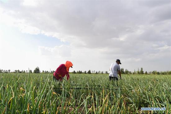 Workers weed the vegetable garden at the Kubuqi Desert in Hangjin Banner, north China's Inner Mongolia Autonomous Region, Aug. 1, 2018. Kubuqi, the seventh largest desert in China, is a good example of China's success in alleviating desertification. About 6,460 square kilometers of the Kubuqi desert has been reclaimed in the last 30 years. (Xinhua/Liu Lei)