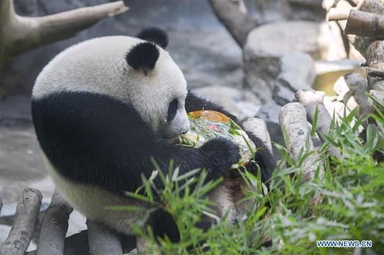 A giant panda twin eats birthday cake in an air-conditioned room at the Nanjing Hongshan Forest Zoo in Nanjing, capital of east China's Jiangsu Province, Aug. 10, 2018. Staff workers at the zoo celebrated the 3rd birthday anniversary for the female giant panda twins