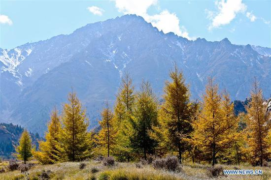 Photo taken on Oct. 4, 2018 shows the autumn scenery of the Qilian Mountains in the Tibetan Township of Mati in Sunan Yugur Autonomous County, northwest China's Gansu Province. (Xinhua/Wang Jiang)