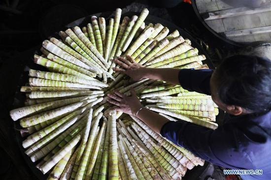 A farmer processes shelled bamboo shoots in Lianhua Village of Baoyuan Township, Chishui, southwest China's Guizhou Province, Oct. 14, 2018. There are 1.32 million mu (0.88 million hectares) of bamboo forests in Chishui. The bamboo-related industry has become an income booster for the locals. (Xinhua/Wang Changyu)