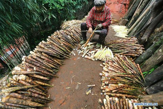 A farmer shells bamboo shoots in Lianhua Village of Baoyuan Township, Chishui, southwest China's Guizhou Province, Oct. 14, 2018. There are 1.32 million mu (0.88 million hectares) of bamboo forests in Chishui. The bamboo-related industry has become an income booster for the locals. (Xinhua/Wang Changyu)