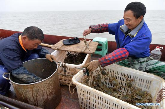 Workers sort Chinese mitten crabs caught from Junshan Lake in Jinxian County of Nanchang, east China's Jiangxi Province, Nov. 6, 2018. Local fishery workers are busy catching Chinese mitten crabs in Junshan Lake during their best fishing season. The total volume of crabs caught in the lake is estimated to reach 2,200 tonnes in 2018. The Chinese mitten crabs of Junshan Lake are a geographical indication (GI) product of China, and are sold to Japan, South Korea, Singapore and other international markets. (Xinhua/Peng Zhaozhi)