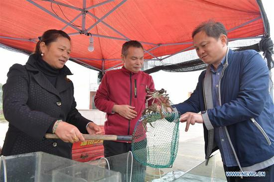 A customer buys Chinese mitten crabs caught from Junshan Lake in Jinxian County of Nanchang, east China's Jiangxi Province, Nov. 6, 2018. Local fishery workers are busy catching Chinese mitten crabs in Junshan Lake during their best fishing season. The total volume of crabs caught in the lake is estimated to reach 2,200 tonnes in 2018. The Chinese mitten crabs of Junshan Lake are a geographical indication (GI) product of China, and are sold to Japan, South Korea, Singapore and other international markets. (Xinhua/Peng Zhaozhi)