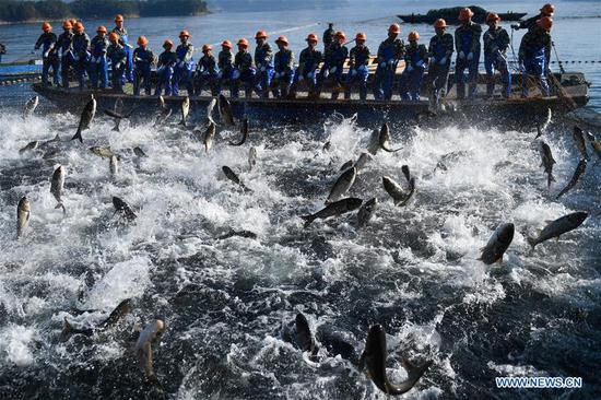 Fishermen pull a huge fishing net on the Qiandao Lake in Hangzhou, capital of east China's Zhejiang Province, Nov. 28, 2018. More than 30 fishermen took part in a huge-fishing-net harvest here on Wednesday. (Xinhua/Huang Zongzhi)