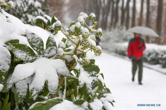 A citizen walks amid snow in Xiangyang City, central China's Hubei Province, Jan. 9, 2019. (Xinhua/Yang Dong)