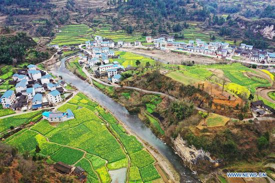 Aerial photo taken on March 5, 2019 shows the scenery of cole flower fields at Mintong Village of Yuqing County in southwest China's Guizhou Province. (Xinhua/Mu Mingfei)