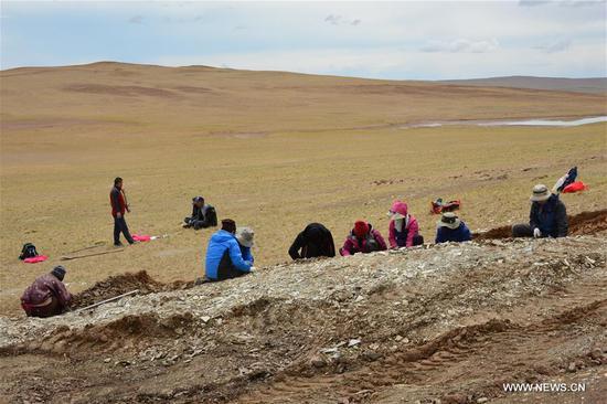 化石叶揭示青藏高原的形成 3