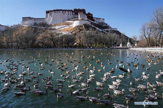 Photo taken on March 10, 2019 shows the view of a park nearby the Potala Palace in Lhasa, capital city of southwest China's Tibet Autonomous Region. (Xinhua/Purbu Zhaxi)