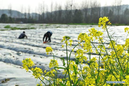 Villages works in fields at Diping Village of Zimenqiao Township in Shuangfeng County, central China's Hunan Province, March 11, 2019. With the temperature rising, farmers are busy with their farm work. (Xinhua/Li Jianxin)